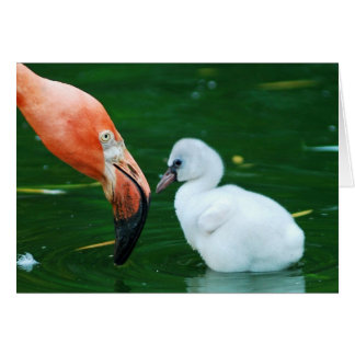 De volwassen Kaart van de Groet van de Flamingo en