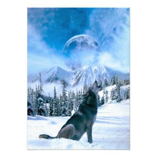 De Vraag van de wolf Foto Prints