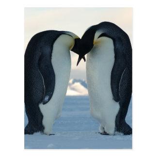 De Vrijage van de Pinguïn van de keizer Briefkaart