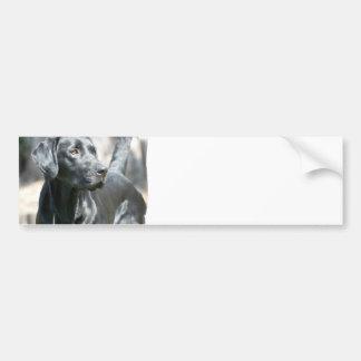 De waakzame Zwarte Stickers van de Bumper van het