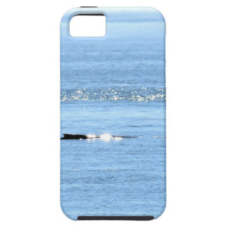 DE WALVIS QUEENSLAND AUSTRALIË VAN DE GEBOCHELDE TOUGH iPhone 5 HOESJE