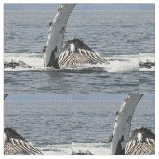 De Walvis van de gebochelde Stof