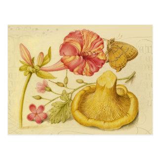 De Waterverf van de vlinder, van de Paddestoel en Briefkaart