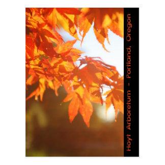 De wazige Ochtend van de Herfst Briefkaart