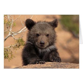De Welp van de grizzly Kaart