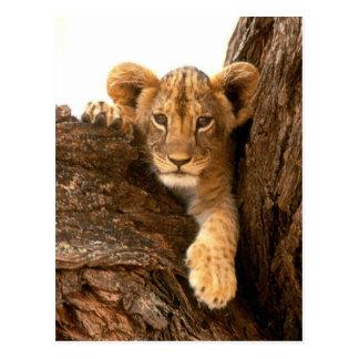 De Welp van de leeuw Briefkaart