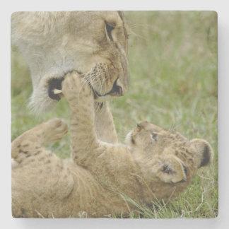 De welp van de leeuw het spelen met vrouwelijke stenen onderzetter