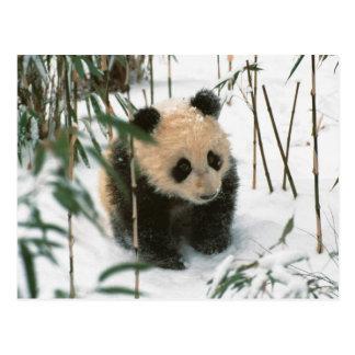 De welp van de panda op sneeuw, Wolong, Sichuan, Briefkaart
