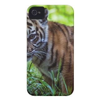 De Welp van de Tijger van Sumatran van huren iPhone 4 Hoesje