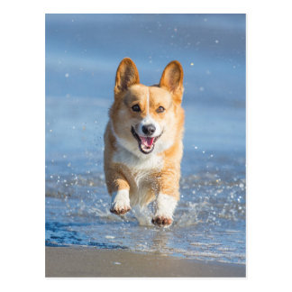 De Welse Hond Corgi die van Pembroke op het Strand Briefkaart