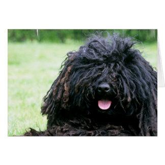 De Wenskaarten van de Hond van Puli
