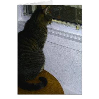 De Wereld van katten Kaart