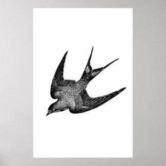 De wijnoogst slikt Illustratie - Antiek Vogel Poster