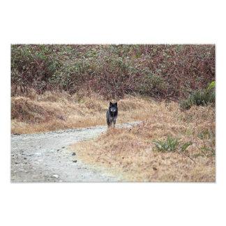 De wilde Foto van de Wolf