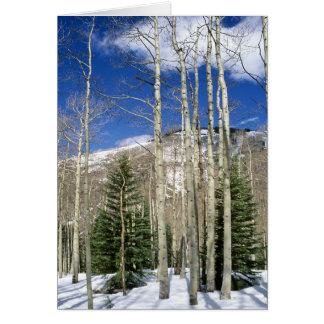 De Wildernis van Colorado Wenskaart