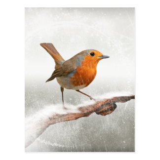 De winter Robin Redbreast Briefkaart