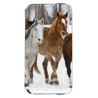 De winter schilderachtig van het lopen paarden op