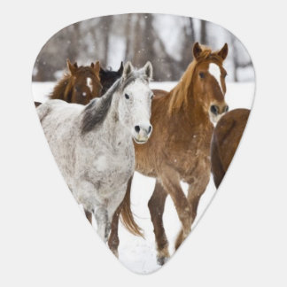 De winter schilderachtig van het lopen paarden op plectrum