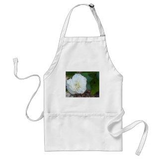 de witte bloem van hibiscusmutabilis standaard schort