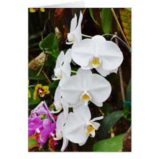 De witte Bloesems van Orchideeën Kaart