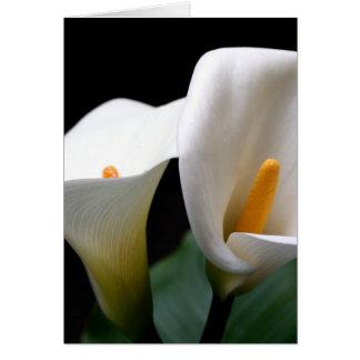 De witte Calla Kaart van Greetign van de Bloem van