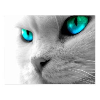 De witte Close-up van de Kat met Heldere Ogen Briefkaart