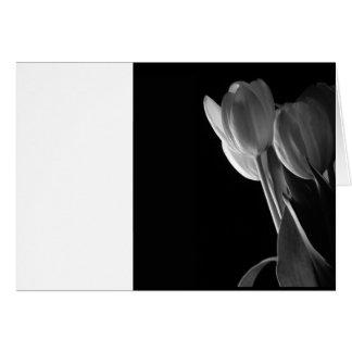 De witte Foto van Tulpen op Zwarte Achtergrond Wenskaart
