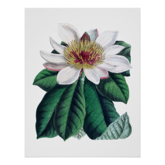 De Witte Grote Bloem Cusion van de magnolia Poster