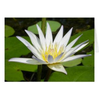 De witte Kaart van de Bloem van Lotus