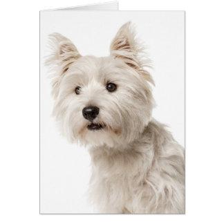 De witte Liefde van Hello van de Hond van het Kaart