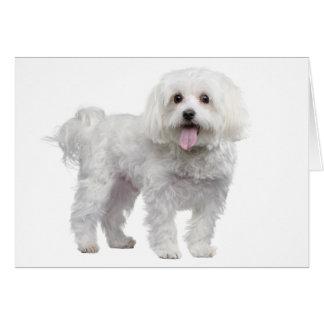 De witte Maltese Hond Lege Notecard van het Briefkaarten 0