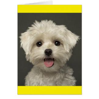 De witte Maltese Kaart van de Nota van de Hond van