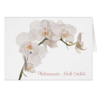 De witte Orchidee van de Mot Kaart