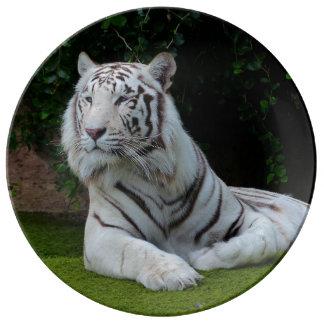 De witte Tijger van Bengalen Porseleinen Bord