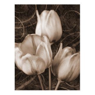 De witte Tulp bloeit Sepia Zwarte Achtergrond Briefkaart