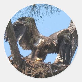 De woeste Jonge Stickers van Eagle
