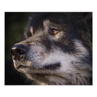 De wolf foto kunst