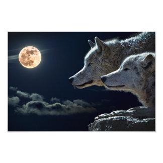 De Wolven die van de wolf bij de Volle maan bij Fotografische Afdruk