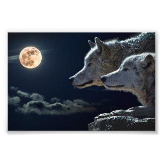 De Wolven die van de wolf bij de Volle maan huilen Foto Print