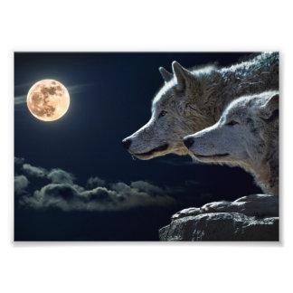 De Wolven die van de wolf bij de Volle maan huilen Fotografische Afdruk