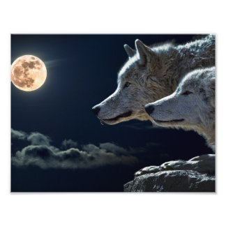 De Wolven die van de wolf bij de Volle maan huilen Foto Afdrukken
