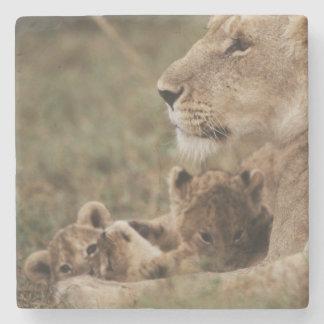 De zitting van de Leeuw van de moeder met welpen Stenen Onderzetter