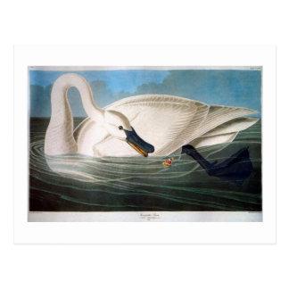 De Zwaan van de trompetter, het Fijne Art. van Briefkaart