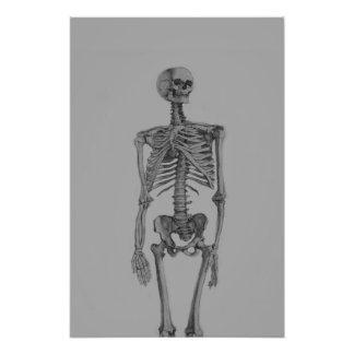 De zwart-wit Schedel van het Skelet Fotografische Afdruk