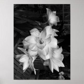 De zwart-witte Bloemen van de Fotografie Poster