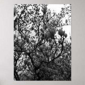 De zwart-witte BloemenFoto van de Boom Poster