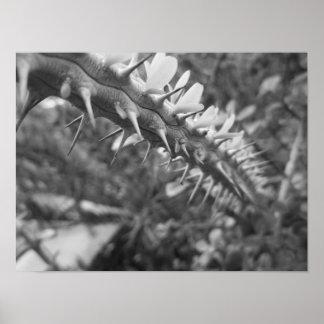 De zwart-witte Foto van de Cactus Poster