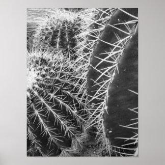 De zwart-witte Fotografie van de Cactus Poster