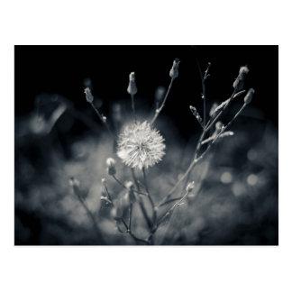 De zwart-witte Fotografie van de Paardebloem Wenskaarten