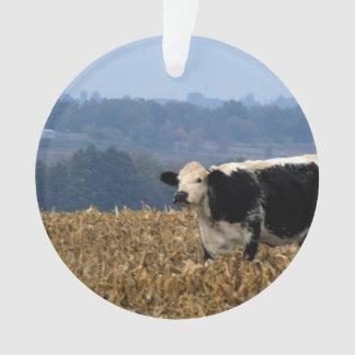 De zwart-witte Koe weidt op vers geploegd gebied Ornament